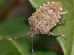 Invasive Species: A Biodiversity Challenge   Sustainability